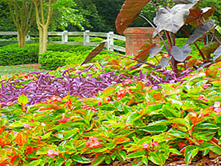 Commercial Landscaping Maintenance Programs